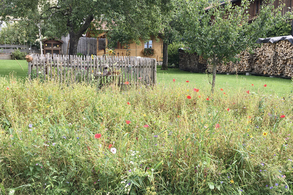 Artenreicher Garten